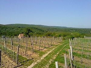 Baranya County - Image: Kistótfalusi szőlőhegy 1