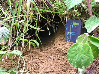 Little spotted kiwi - Burrow entrance, Zealandia