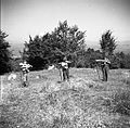 Kosci z Oštrca na Košenicah v Gorjancih 1956 (9).jpg
