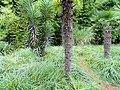 Kunming Botanical Garden - DSC03086.JPG