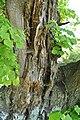 Kurivtsi-Lypa-Franka-15058372.jpg