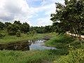 Lake at Citrus Research Institute 5.jpg