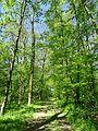 Landschaftsschutzgebiet Gestorfer Lößhügel (9).JPG