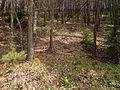 Landschaftsschutzgebiet Hermannstal Nr. 41, 5 WDPA ID 321564 Sublocation DE-TH.jpg
