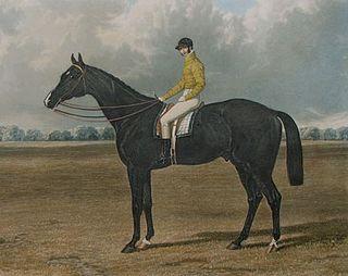 Launcelot (horse) British-bred Thoroughbred racehorse