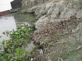 Launch & Paths down to river in the shore of Teesta river 02.JPG