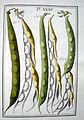 LeBerryais Haricots planche 35.jpg