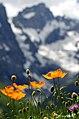 Le Jardin Alpin du Lautaret.jpg