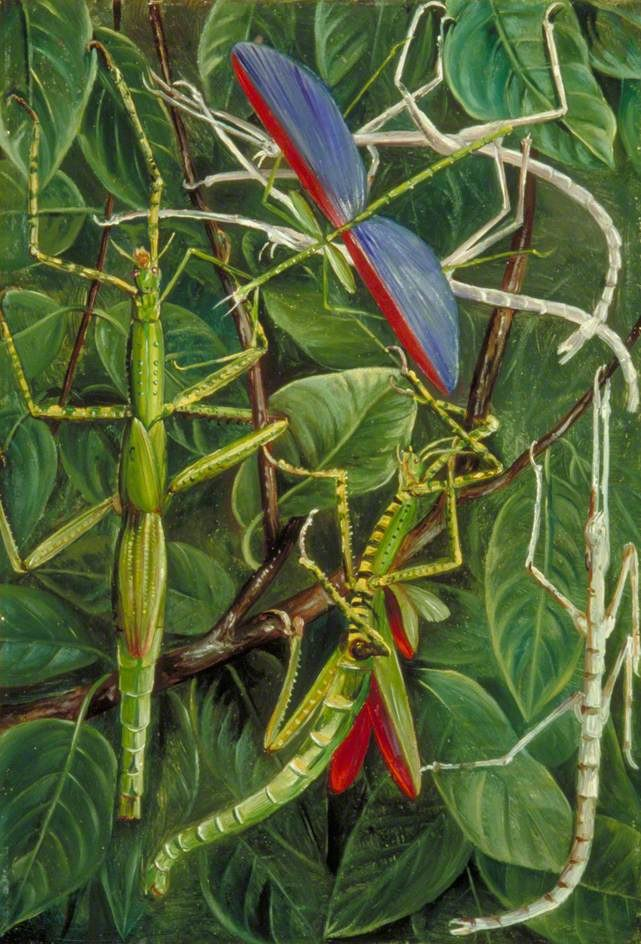 Leaf Insects and Stick Insects Marianne North