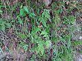 Leaves 00.jpg
