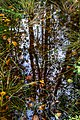Leaves and reflections in a mossy puddle 6.jpg