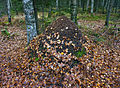 Leaves on ant hill.jpg