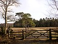 Leaving the King's Hat Inclosure, New Forest - geograph.org.uk - 112795.jpg