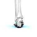 Left cuboid bone 03.png