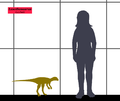 Lesothosaurus SIZE.png