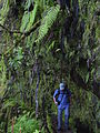 Levada Caldeirao Verde auf Madeira.JPG