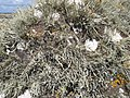 Lichens on boulder - geograph.org.uk - 1578282.jpg