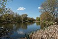 Lord's of manor pond-wiki.jpg