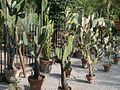 Lorto-botanico-di-padova-2016 28340423396 o 21.jpg