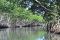 Los Haitises - río.JPG