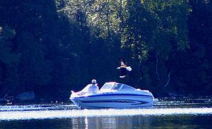 Lower Saranac Lake - Image: Lower Saranac Lake Bald Eagle Boat