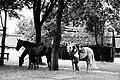 Lublin Village Open Air Museum, Poland (50309793067).jpg