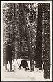 Lumbering postkort.jpg