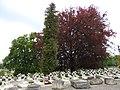 Lychakiv Cemetery 17.jpg