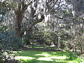 Magnolia Plantation and Gardens - Charleston, South Carolina (8555476747).jpg