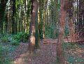 Malahide Castle Woods Bokehrama (22mm f 0.36) (6810788502).jpg
