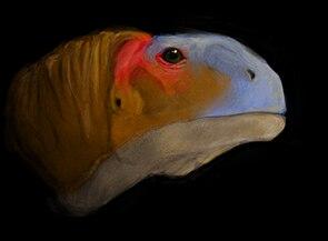 Lebendrekonstruktion des Kopfes von Malawisaurus dixeyi.