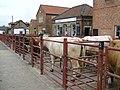 Malton Cattle Market - geograph.org.uk - 422901.jpg
