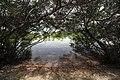 Mangrove Forest, Olango Island Sanctuary.jpg