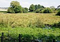 Marsh on the Itchen - geograph.org.uk - 947376.jpg