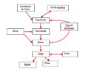 Metabolisme de l'àcid úric.png