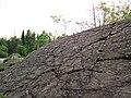 Metagraywackes (Chelmsford Formation, Paleoproterozoic, 1.74 Ga; Larchwood North outcrop, Sudbury Impact Structure, Ontario, Canada) 1 (32817444677).jpg