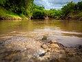 Molo river.jpg