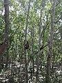 Monkey climbing at tree.jpg
