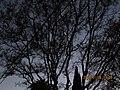 Monterey Park, CA, USA - panoramio (396).jpg