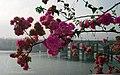 Morbi Flowers Bridge - panoramio.jpg