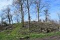 Motte Vusseberg.jpg