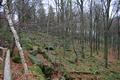 Motten Motten Jagdhaus Hohe Kammer Basalt Outcrop.png