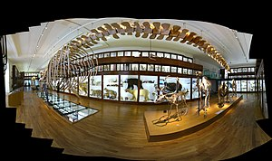 Natural History Museum of Nantes - Image: Muséum Histoire Naturelle Nantes 20091004