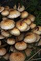 Mushrooms at Dumfries House.jpg