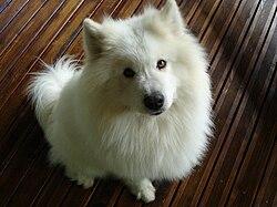 My dog.jpg