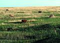 NRCSSD85001 - South Dakota (6185)(NRCS Photo Gallery).jpg