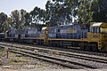 NR 54, 55 and 89 freight train on the Main Southern line in Junee.jpg