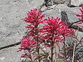 NTS - Wild Flowers 025.jpg