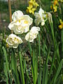 Narcissus Bridal Crown01.jpg