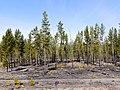 Nature - panoramio (47).jpg